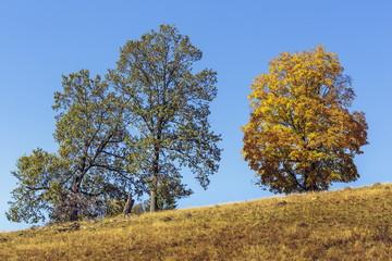 Autumn landscape with deciduous trees uphill