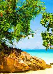 Jungle Lagoon Peaceful Paradise