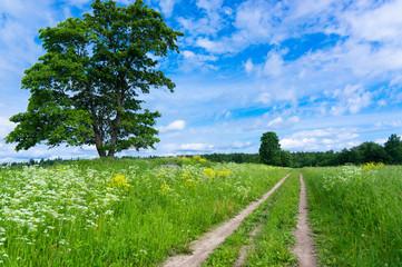 Through the Green Fields of Sunlight