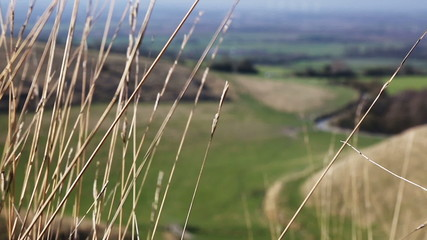 Grasses in breeze with valley in background out of focus