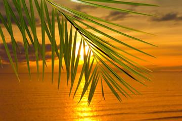 Palm Bliss Branch