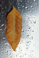 Lonely yellow autumn leaf on a steel sheet with the rain drops