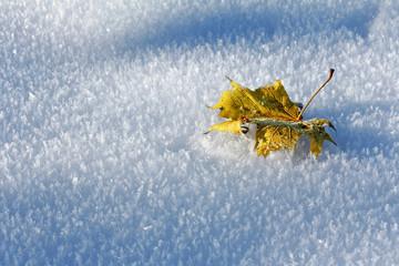 Herbst auf Eis