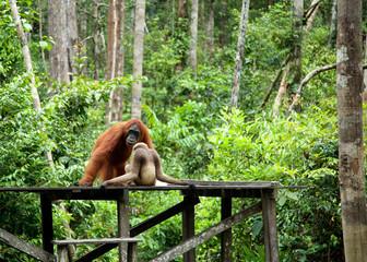 monkey talk
