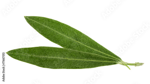Fotobehang Olijfboom olive leaves isolated on white
