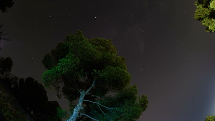 Milky way  fish eye  lens mediterranean pine