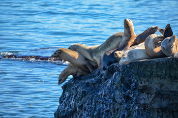 Sea lions on a cliff