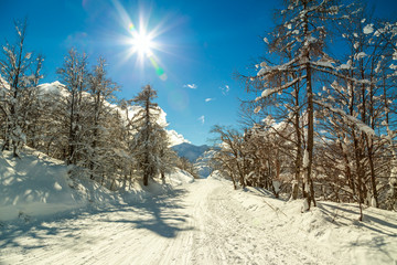 Winter forest in Alps near Vogel sky center in Slovenia