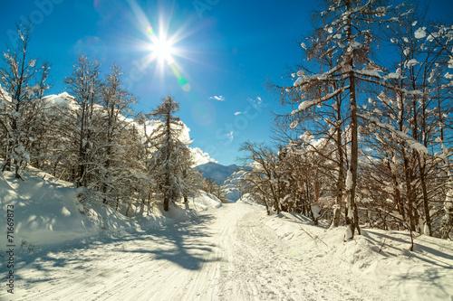 canvas print picture Winter forest in Alps near Vogel sky center in Slovenia