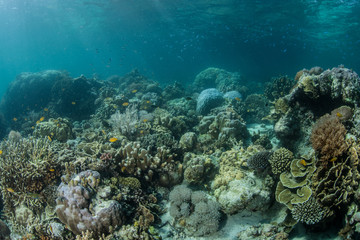 Reef in the Philippines