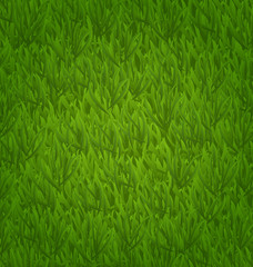 Green grass field, nature background