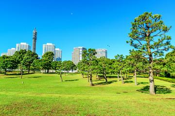 Landscape pine trees prospects the condominiums of landmark.