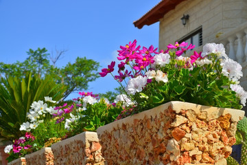 ..flowers in a pot at the front of the house