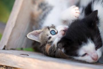Sweet little kitties