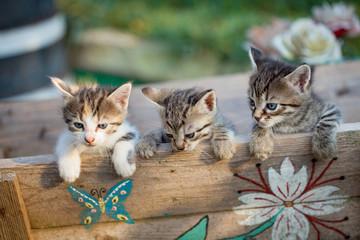 Sweet tree kitties