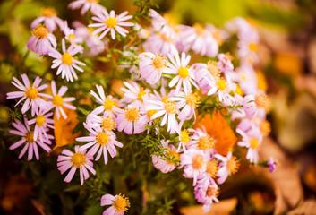 fall garden flowers closeup