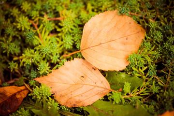 fall leafs on green garden plants