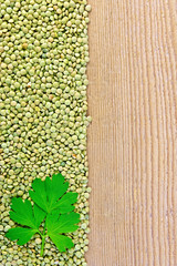 Lentils green on board on the left with parsley