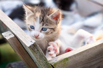 Little baby cat
