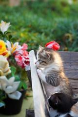 Little baby cat in the garden