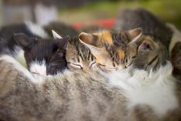 Feeding Baby kitties