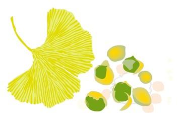 銀杏の葉と銀杏の秋の紅葉イラスト