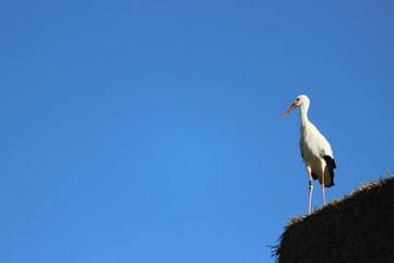 Storch auf Strohballen