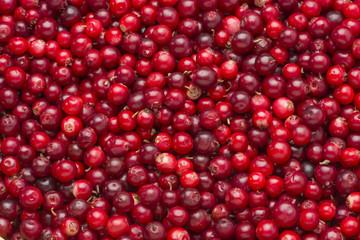 Lingonberries close horizontal.