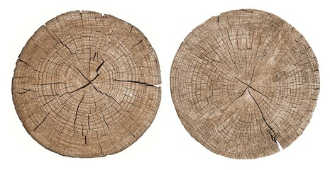 Cross section of tree trunk showing growth rings on white, set