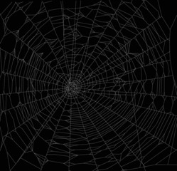 white square spider web