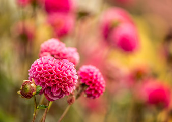 Beautiful autumn flowers