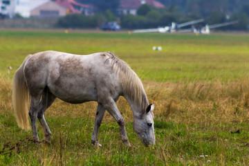 Pferd am Flugplatz