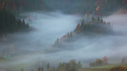 Morning Fog in the Forested Mountains