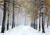 First snow in birch city park - 71687647