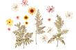 Obrazy na płótnie, fototapety, zdjęcia, fotoobrazy drukowane : summer flowers