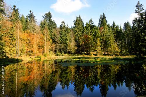 canvas print picture Waldsee im Herbst mit Spiegelung