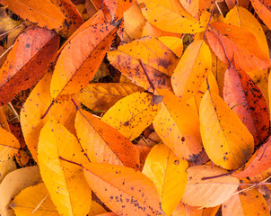 colorful fall leafs background