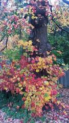 Arbre d'automne avec ornement de feuille colorée