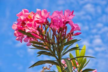 Colorful mediterranean flowers at sunny morning
