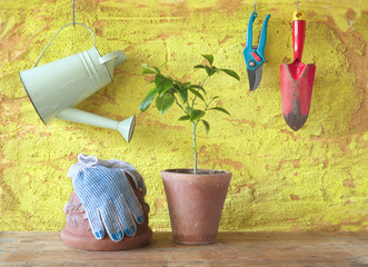 A plant in a flower pot with gardening tools, gardening concept