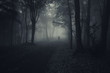 dark forest with spooky man walking on a path - 71691679