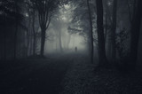 dark forest with spooky man walking on a path poster