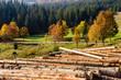 Obrazy na płótnie, fototapety, zdjęcia, fotoobrazy drukowane : logs on a hillside near the  forests