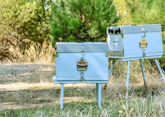 Cute apiary in forest