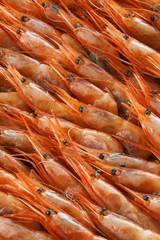 アマエビ Small shrimp