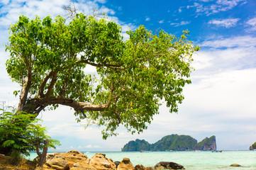 Under Trees Island Lagoon