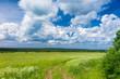 Fields of Sunlight Acres Wild