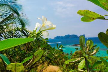 Flora and Sea Foliage Sky