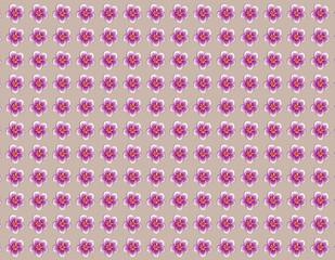 패턴: Flowers pattern