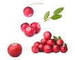 Wild cranberry